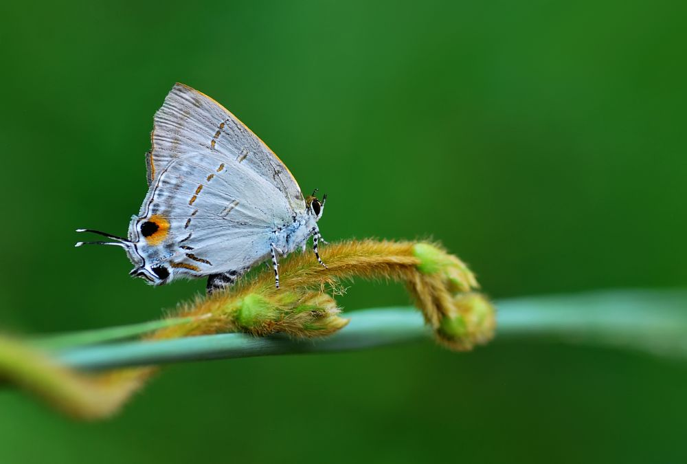 Photo in Macro #macro #animals #insects #closeup #butterfly #nikon #wild #white #photogrphy #indonesia #stage