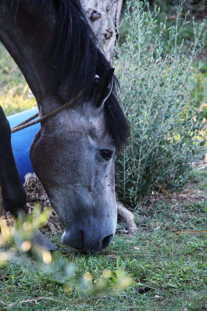 Photo in Animal #animal #horse