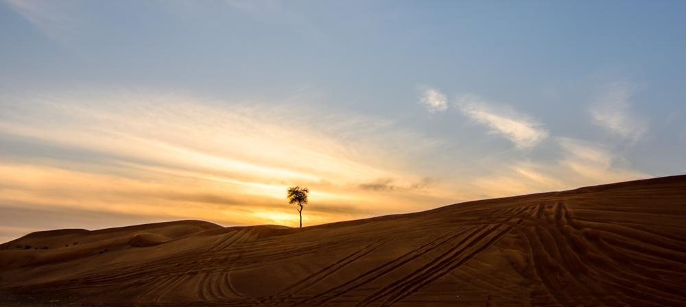 Photo in Landscape #desert #landscape #dunes #sand #sharjah