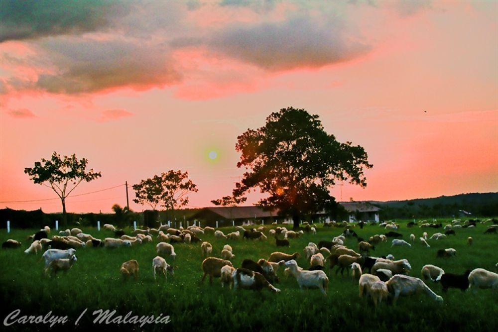 Photo in Random #malaysia's #farm #resort