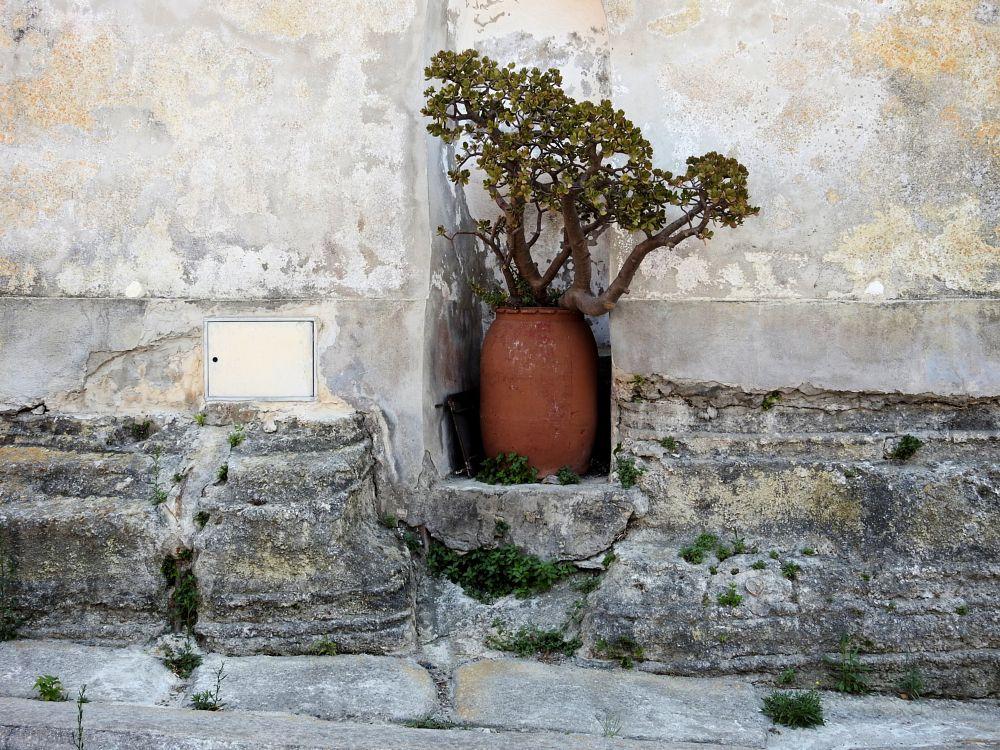 Photo in Still Life #pianta #plant #vaso #pot #procida #terra murata #island #arnaldo de lisio #naples #italia #napoli #isola
