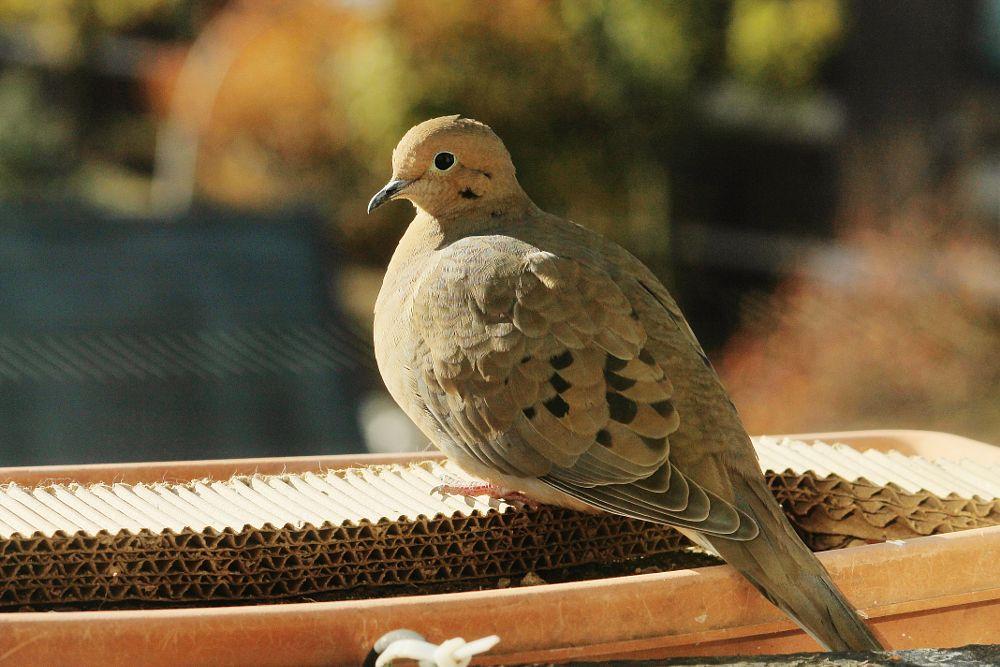 Photo in Animal #newyork #bird #nature #animal #random #fireescape