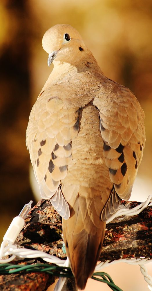Photo in Animal #newyork #bird #animal #nature #fireescape #random