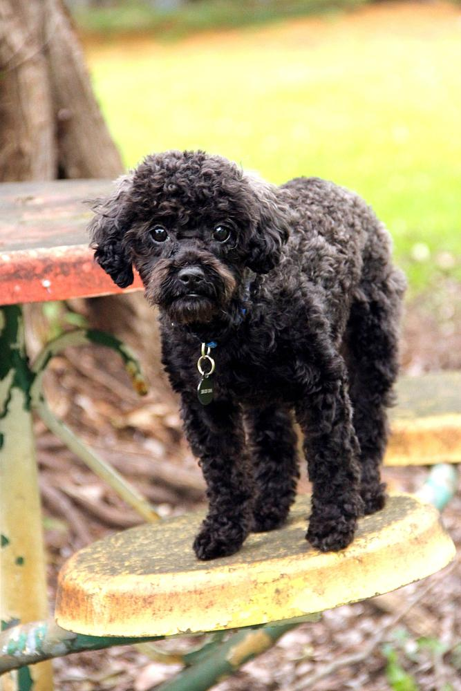 Photo in Animal #dog #dogs #black dog #small dog #colors #puppy #puppies #pets #paws