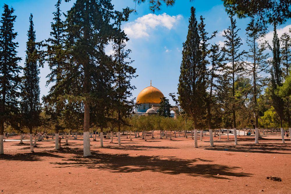 Photo in Random #aqsa #mosque #yellow #gold #sky #colors #summer #nikon #sun #tree #green #landscape #travel #muslim #islam #hijab #quds #jerusalem