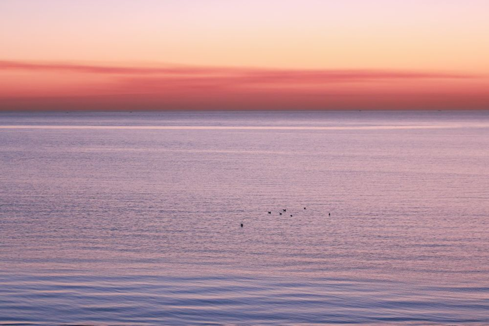 Photo in Nature #tranquil #tranquility #serene #serenity #calm #peaceful #before sunrise #dawn #scenic #birds in water #sea #sky #color #sky color #red sky #blue sea #horizon #mood #quite #kuwait #canon #minimal #minimalist #minimalistic #beauty #beauty of nature #nature #natural #nature lvoer #naturelover #early morning #morning #morning view #calm view #day start #start of the day #seascape
