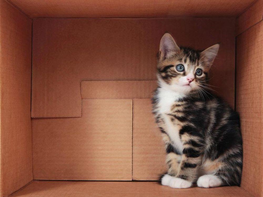 Photo in Animal #cat #kitten #tabby #cute #box