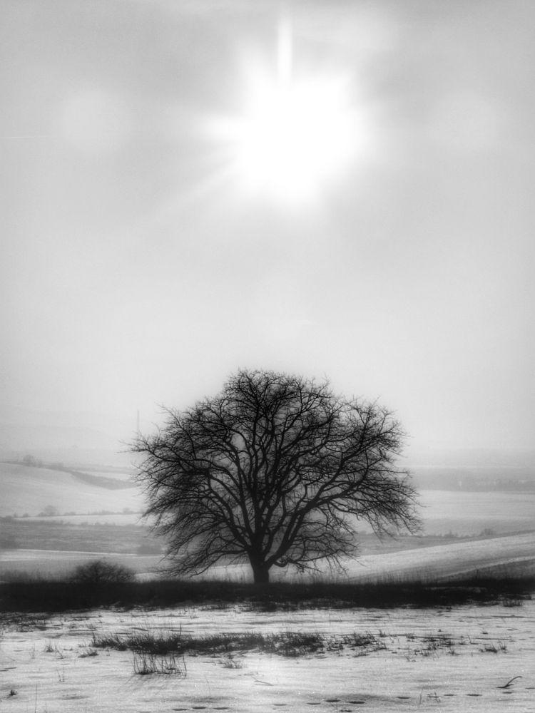 Photo in Nature #winter #nature #tree #monochrome