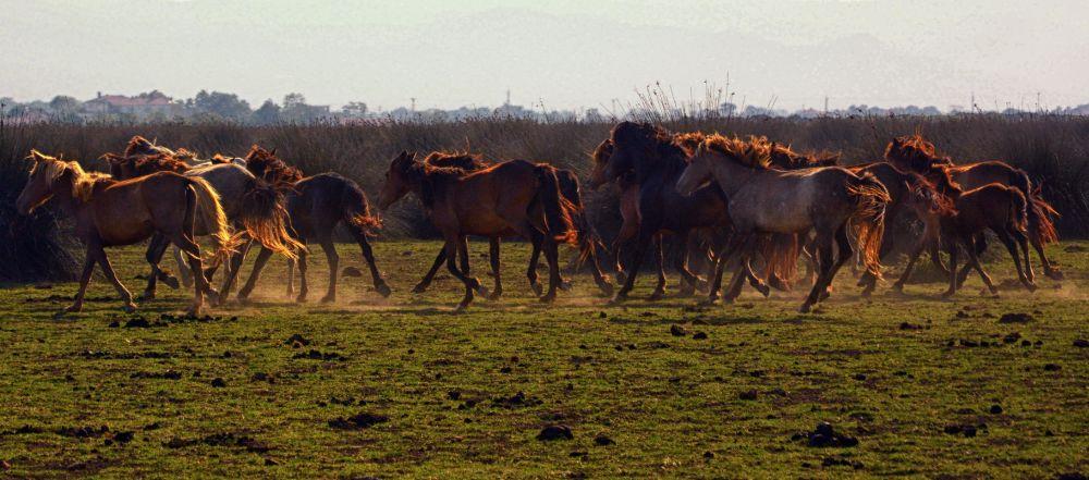 Photo in Animal #horse #nature #rural #landscape #random #love #delta