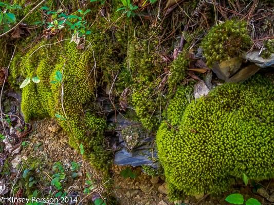 Photo in Travel #tennessee #pigeon forge #foliage #moss #green #outside #outdoors