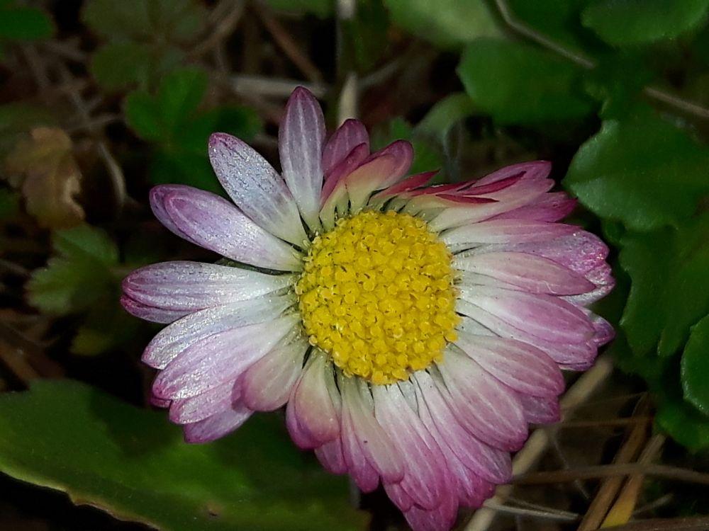 Photo in Macro #flowers