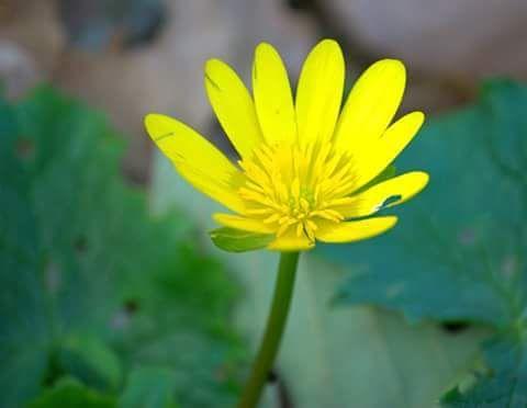 Photo in Random #flower #nature #random #fleur #printemps #beauty #belle