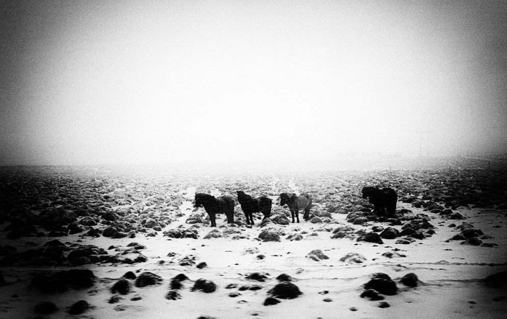 Photo in Animal #horses #iceland #snow #storm #cold