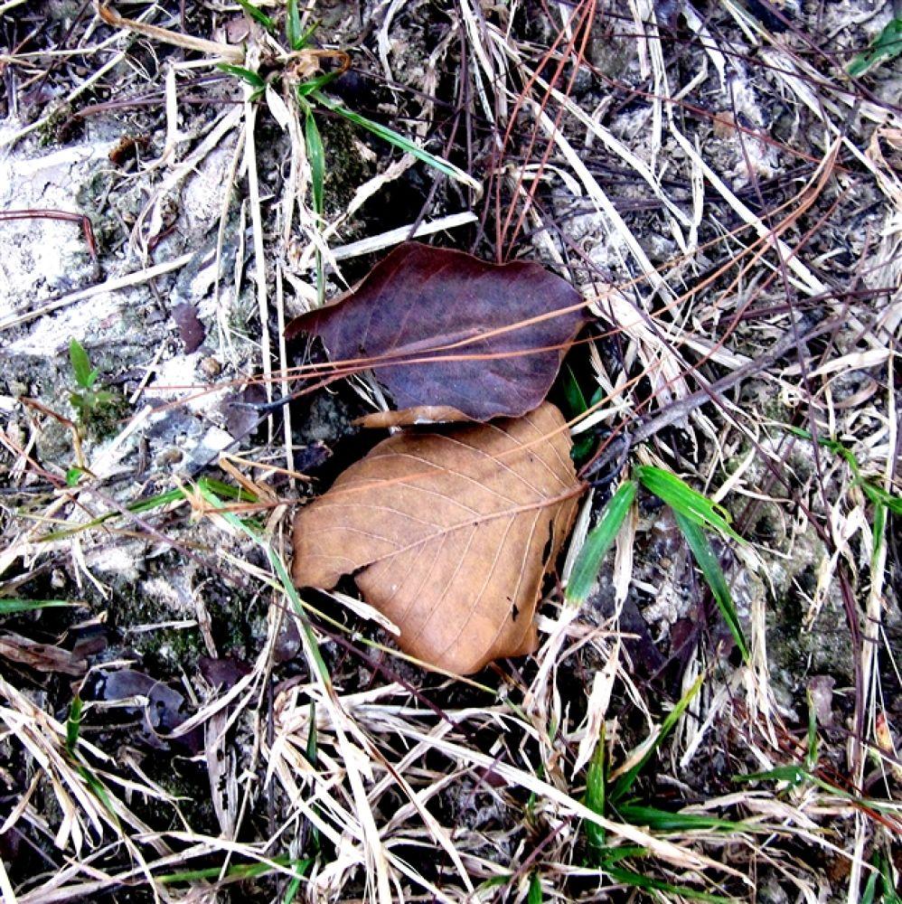 Photo in Random #lonely #leaf(gazipur)