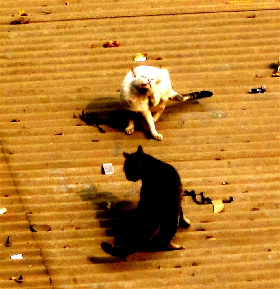 Photo in Random #on #cats #roof
