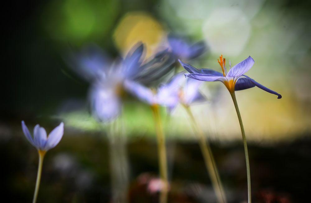Photo in Macro #spring nature #nature #flower #nature atmosphere #macro