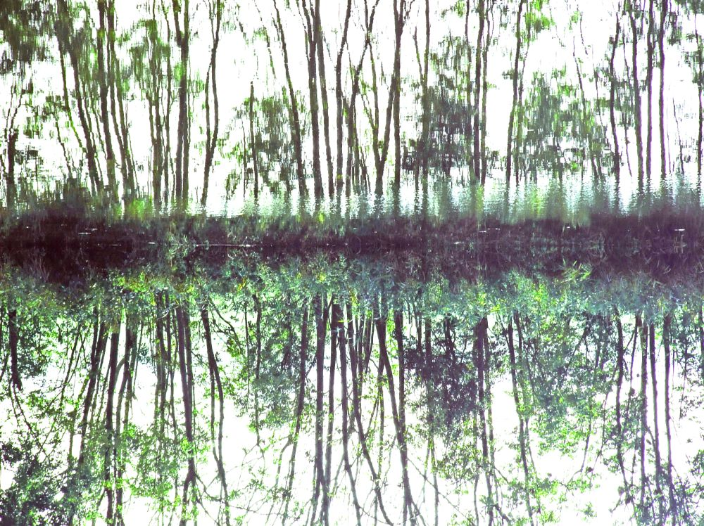 Photo in Nature #trees #reflection #water #nature #landscape