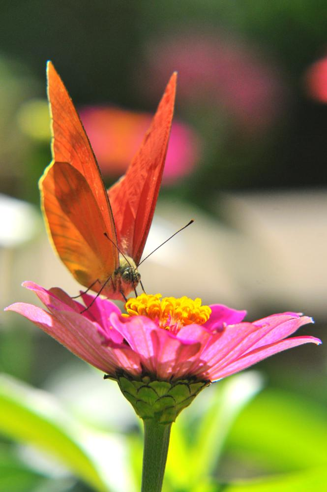 Photo in Macro #butterfly #nationalgeography #life #@animal #macro #nikon #nikond300s #indonesia #@wildworld