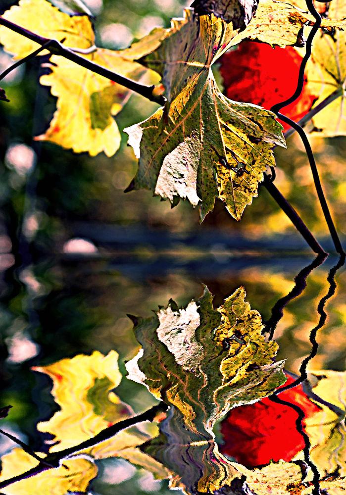 Photo in Nature #abstract #nikon #d3000 #autumn #vizzani #matteo #pentaxk10d #pentax k10
