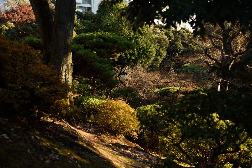 Photo in Nature #japan #garden #nature #tokyo #kyu-furukawa garden #japanese #eastern