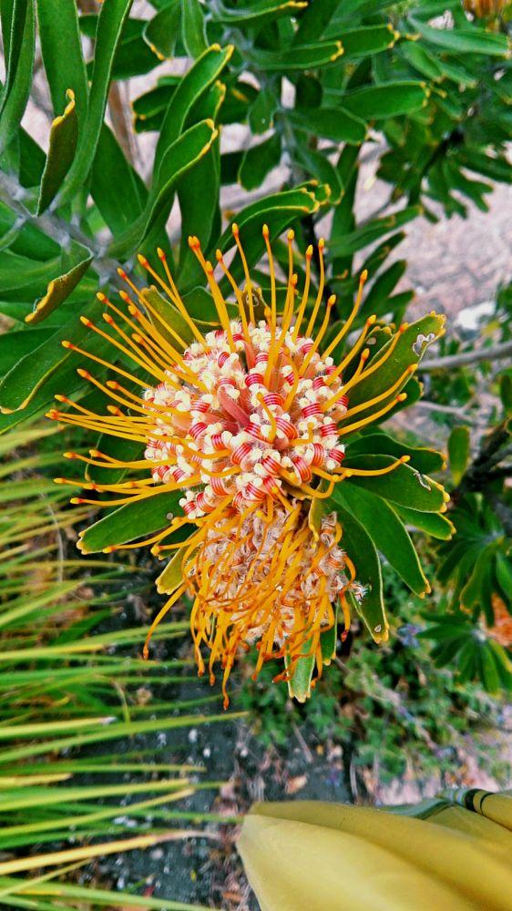 Photo in Nature #flowers #nature #plants #pretty #orange