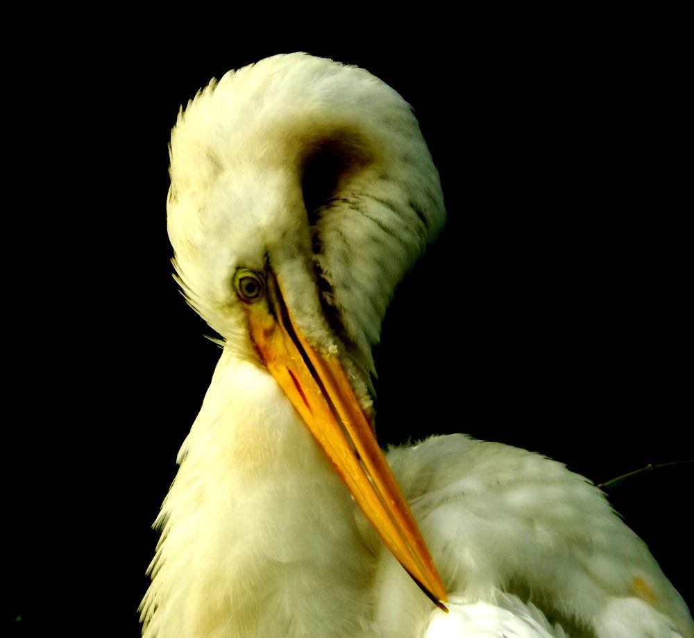 Photo in Animal #animal heron bird nature brasi