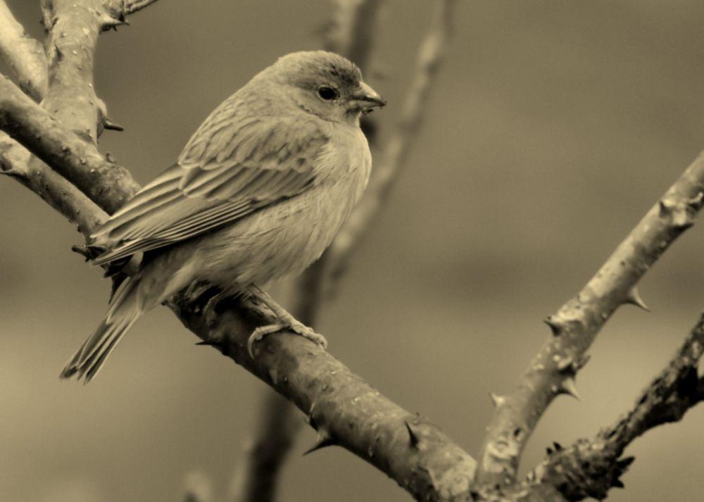 Photo in Animal #bird #nature #life #animal