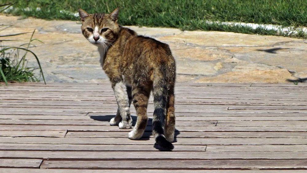 Photo in Random #kedi #portre #yaban hayatı #bakış