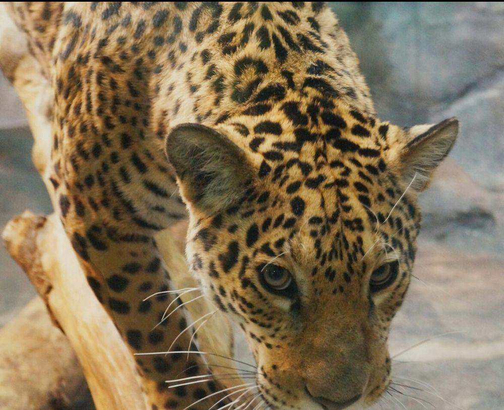 Photo in Animal #animal #juguard