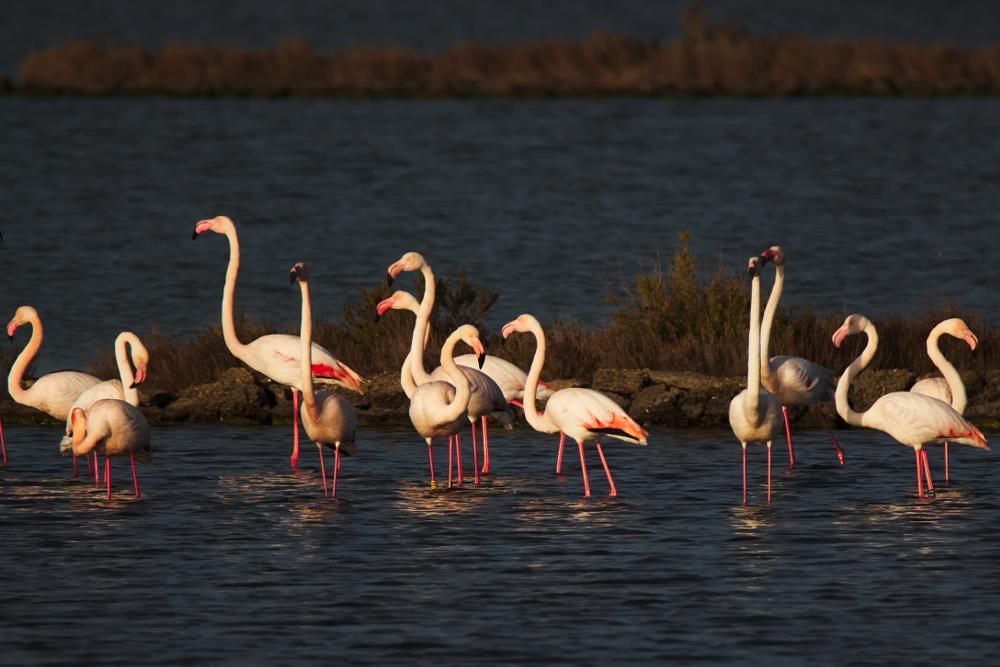 Photo in Nature #bird #nature #flamingos