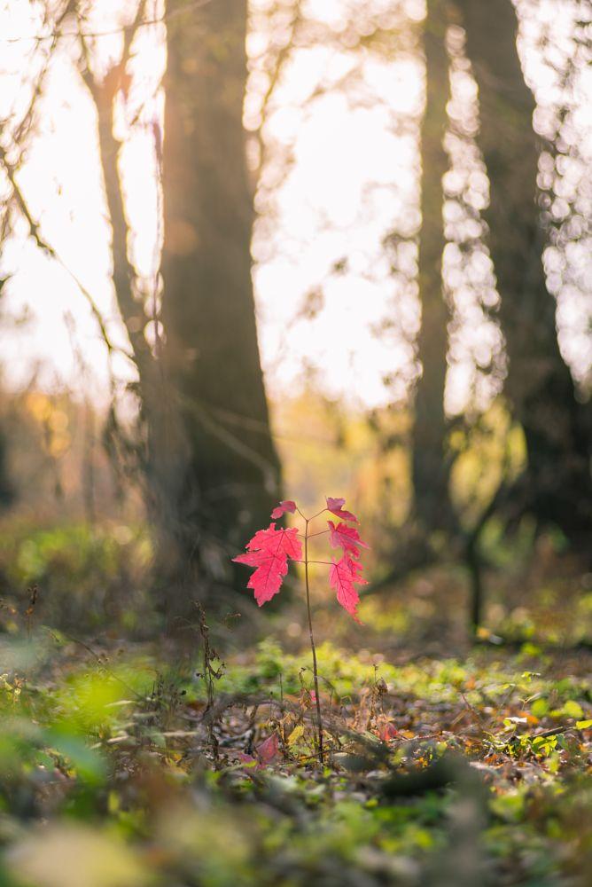 Photo in Nature #nature #naturelights #autumn #red