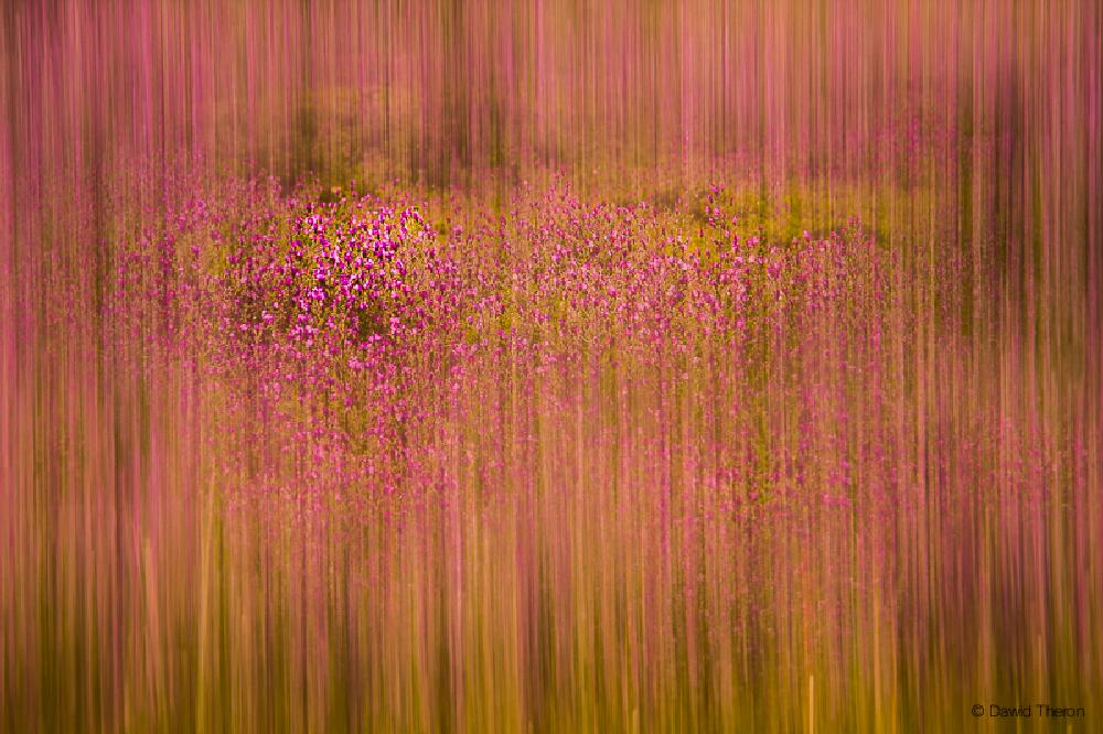 Photo in Abstract #artistic #nature #abstract #colour