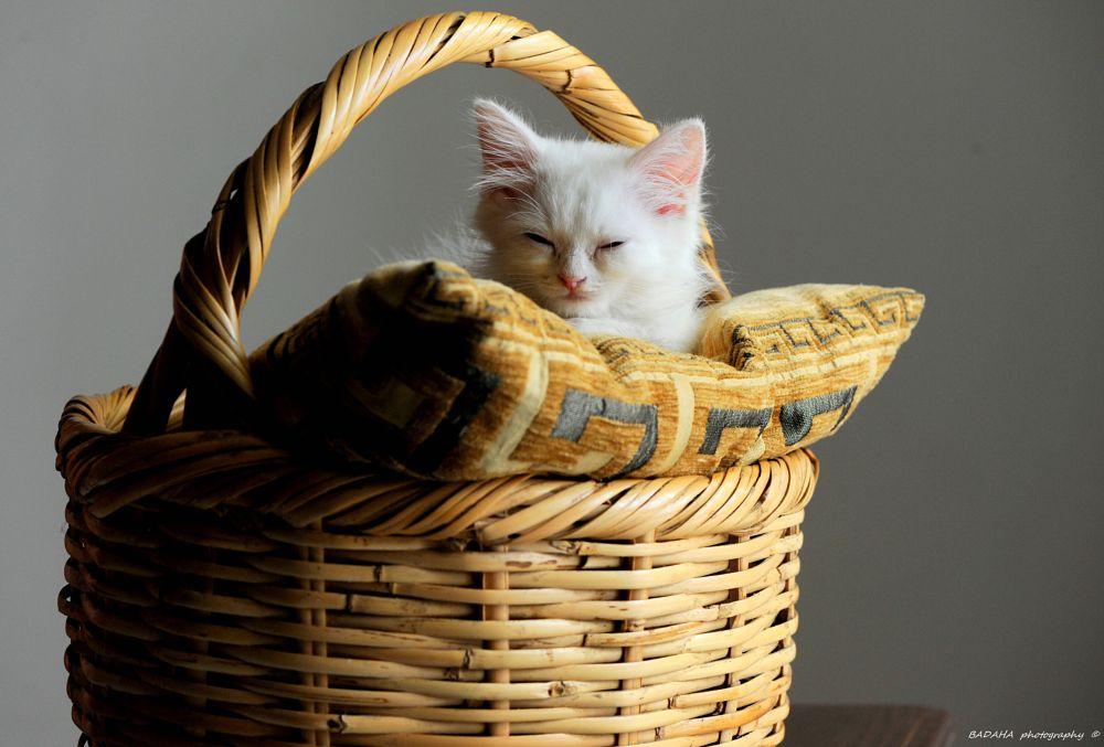 Photo in Fine Art #sleep #cat #home #beautiful #badaha #photo #nice #day