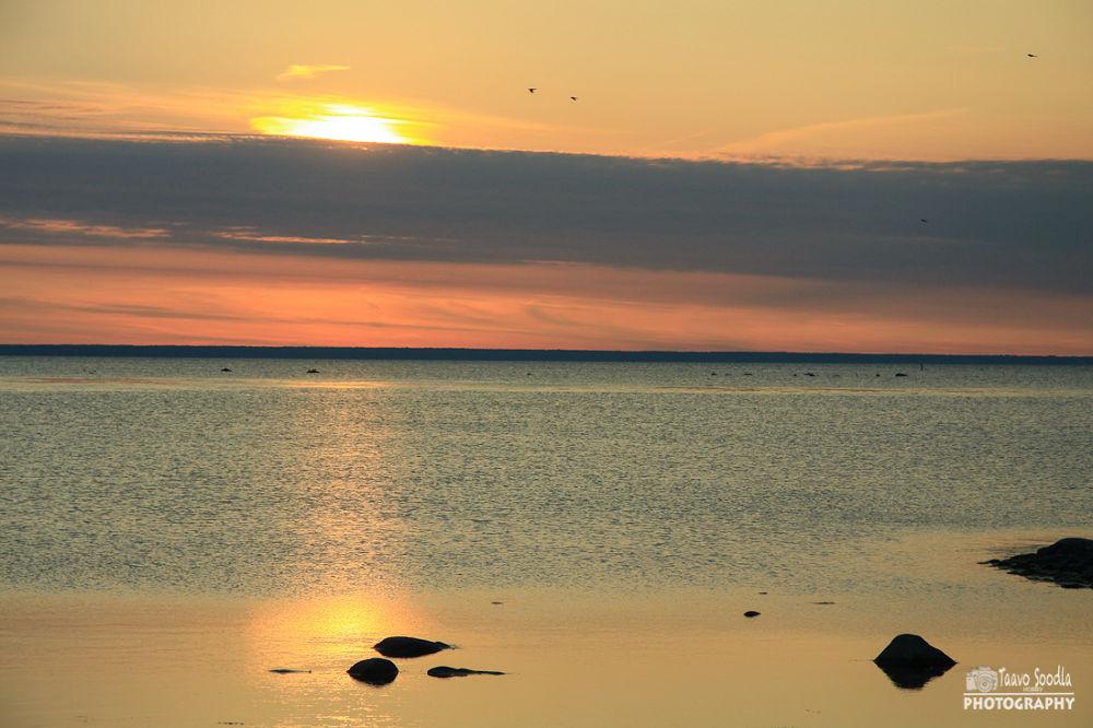 Photo in Nature #sunset #evening #estonia #sea