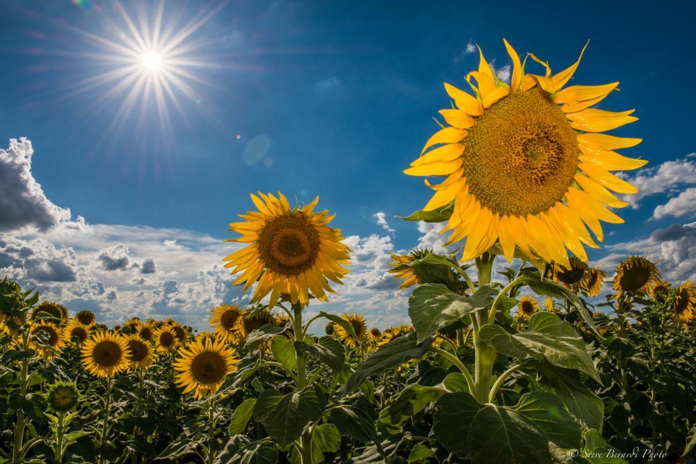 Photo in Nature #flowers #sun #landscape
