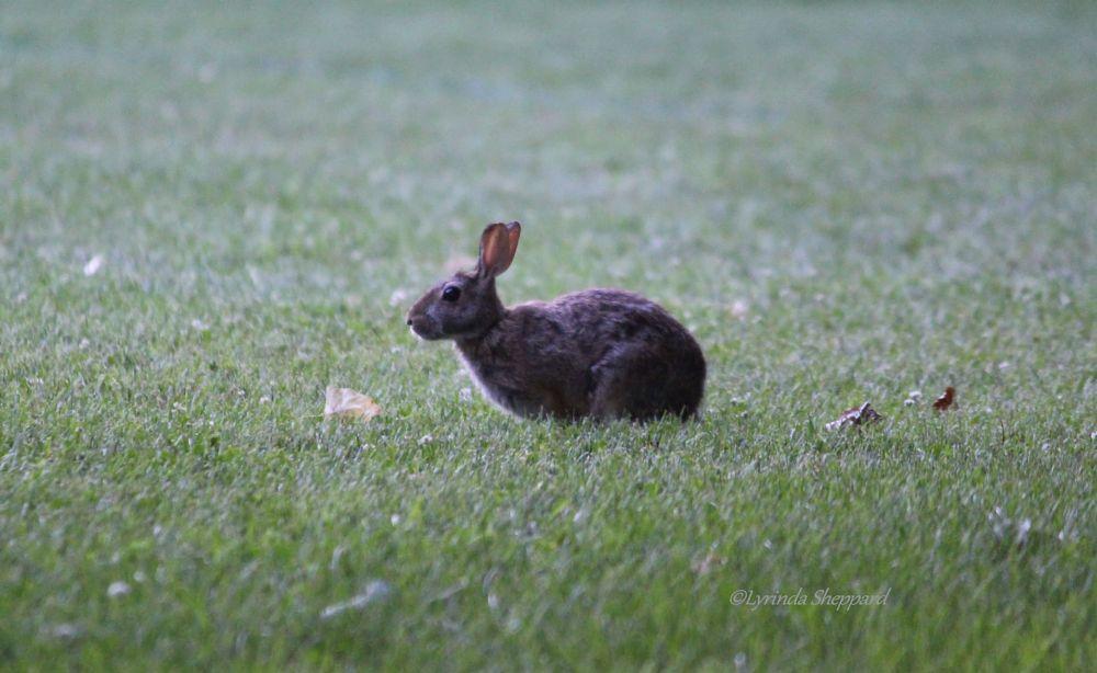 Photo in Animal #rabbit #bunny #nature #evening