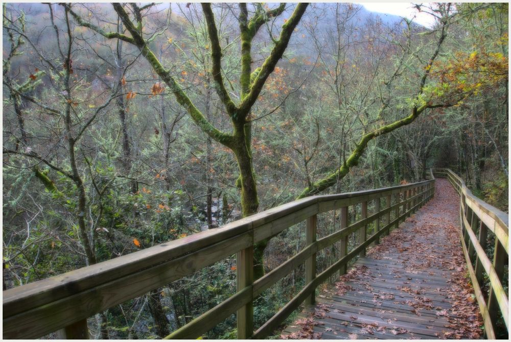 Photo in Landscape #bosque #naturaleza #pasaje
