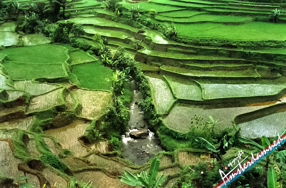 Photo in Landscape #kampung naga #rice #fields #rice fields #indonesia #java #island #paddy fields #landscape #nature #asian #asia