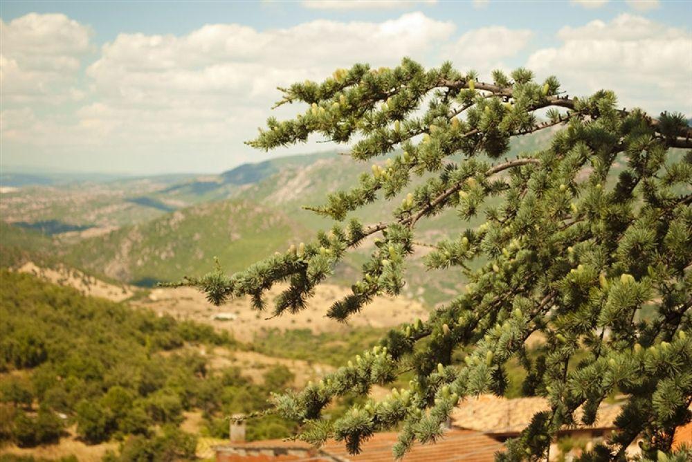 Photo in Random #and #landascape #juniper