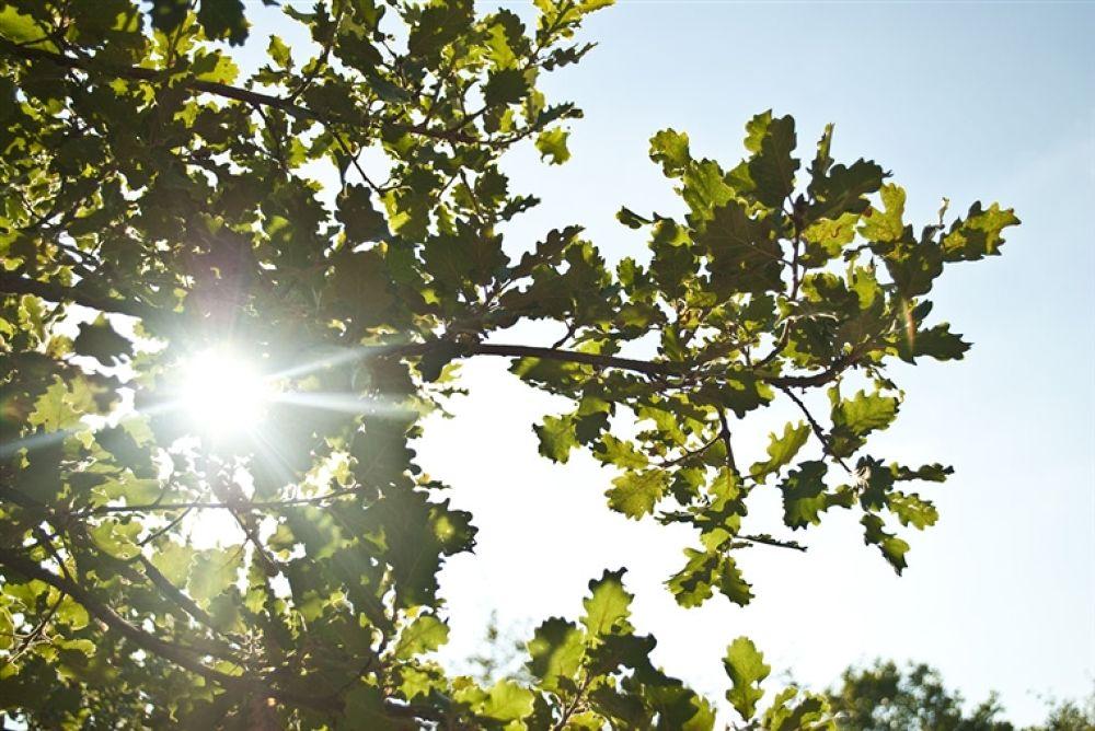 Photo in Random #above #sun #an #oak