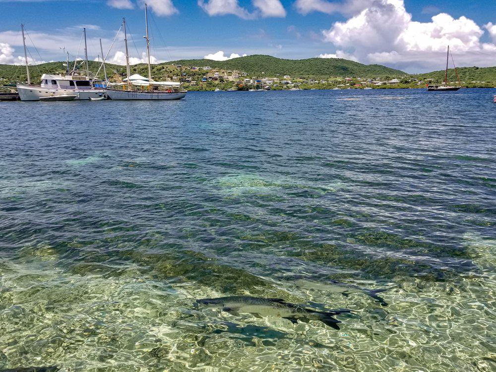 Photo in Travel #puerto rico #sea #caribbean #culebra #blue #boats #fish #mountians
