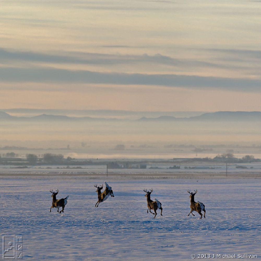 Photo in Animal #bozeman #montana #winter #snow #deer