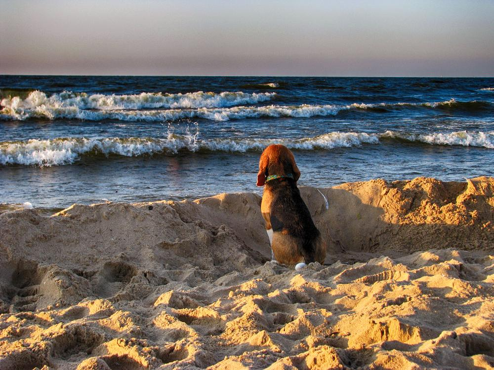 Photo in Sea and Sand #dog #sand #sea #waves #longing #horizon
