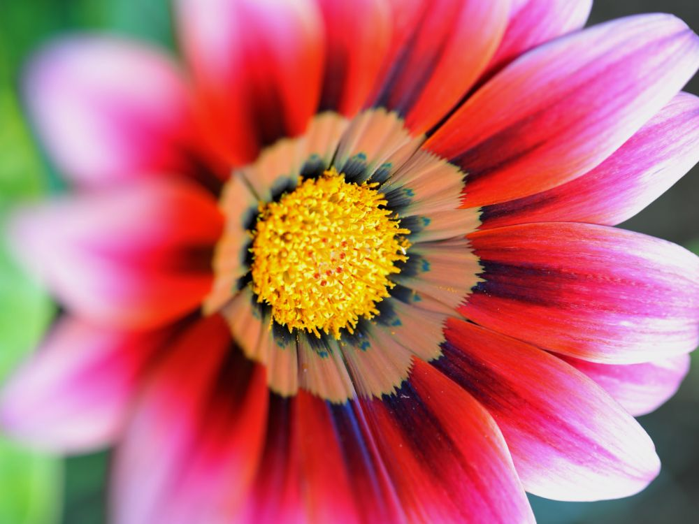 Photo in Nature #flower #nature #color