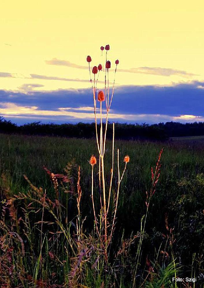 Photo in Nature #magyarország heves megye sirok