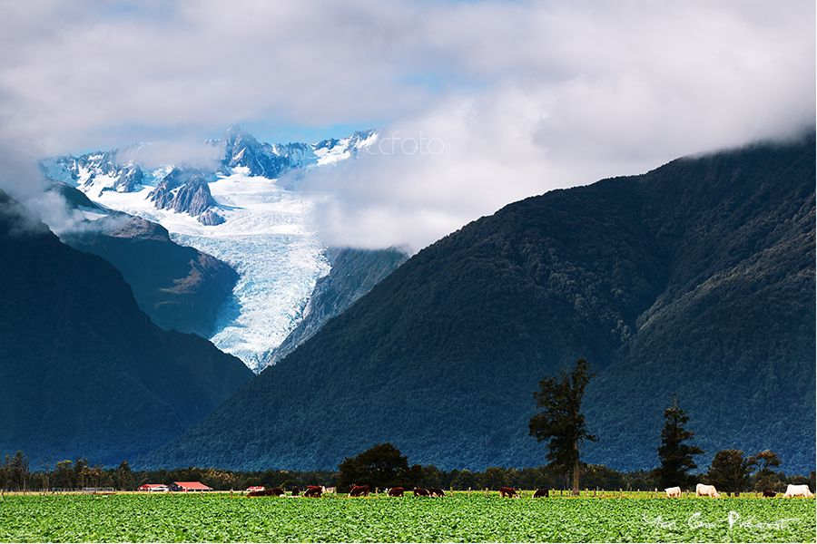 Photo in Landscape #landscape #countryside #new zealand #painting color #glacier #mountain #village #farmhouse #cows #green field #peaceful village