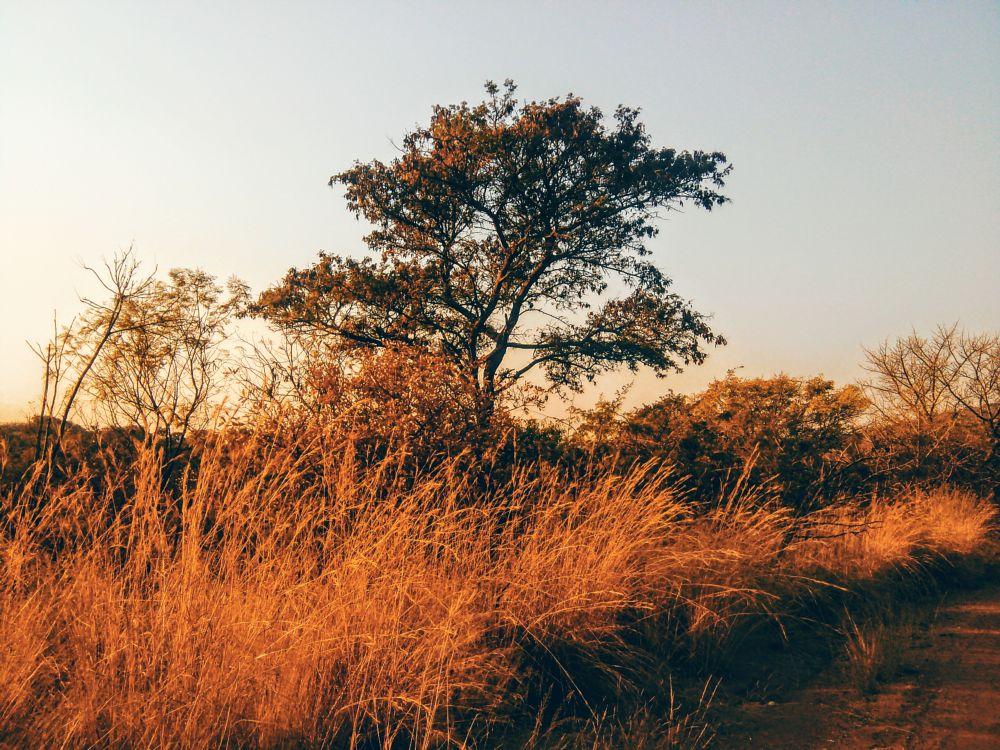 Photo in Random #naturephotography #photographers #tree #life #photographyislifee