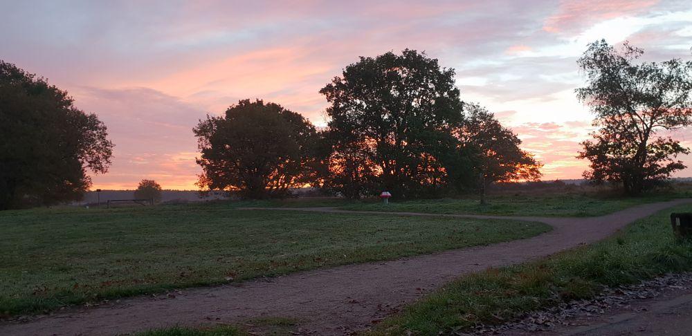 Photo in Nature #nature #bussumscheheide #sunrise