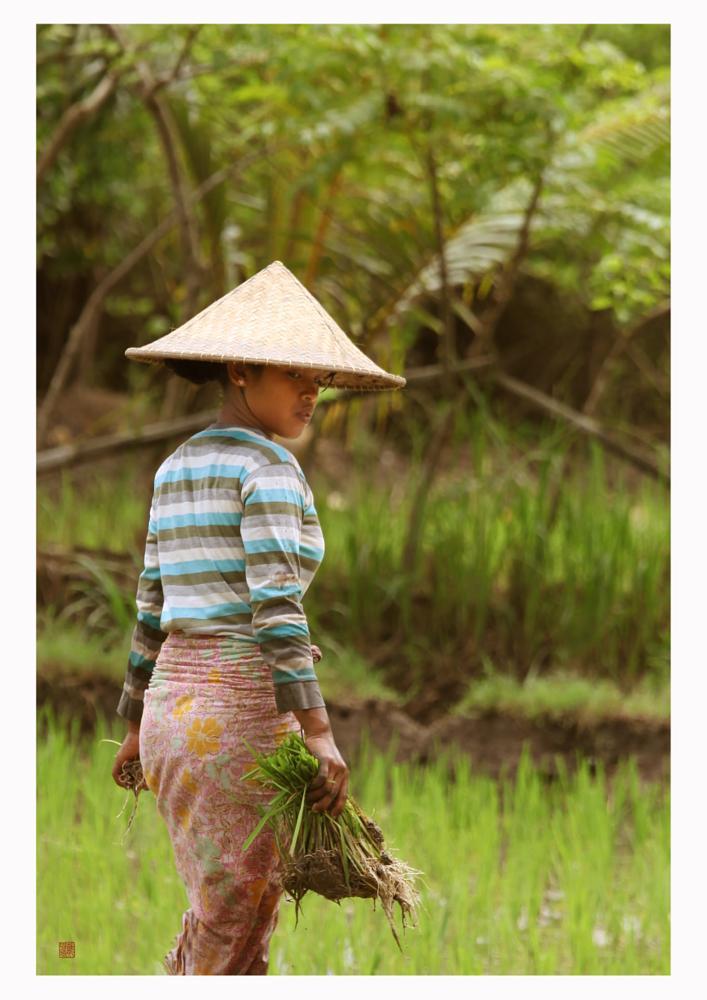 Photo in Fine Art #travel #bali #rice field