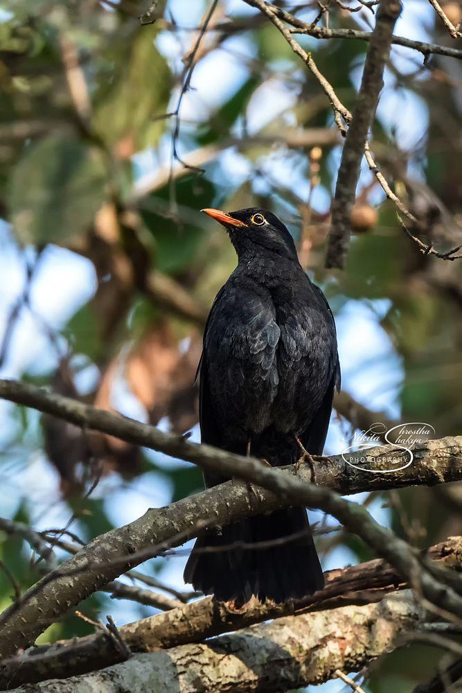 Photo in Nature #bird #birds #nepal #birdsofnepal #nepal #nature #beauty #black #beautiful